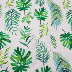 Cotton Tropical Plants