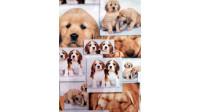 Tela Algodón Fotos Perritos Collage - Tejido Patchwork 100% Algodón con fotos tipocollage de perritos.